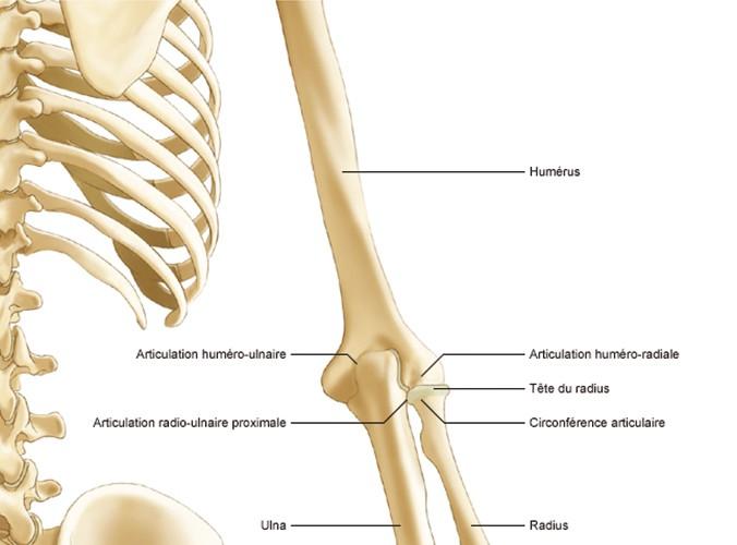 articulațiile rănite în cauza dimineții Tratamentul Kashnitsky al coloanei vertebrale și articulațiilor